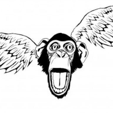 flying chimpas