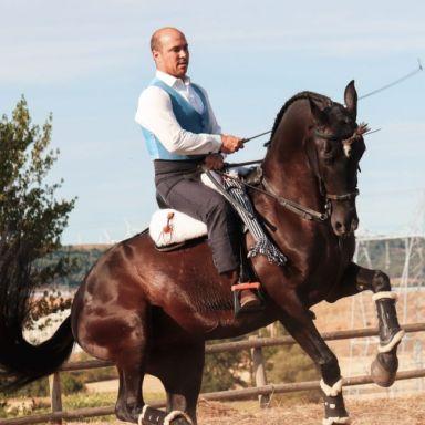la magia del caballo espectaculo ecuestre