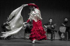 flamenco temple entrevista