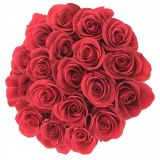 rich roses 35477